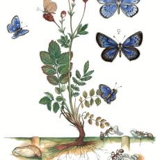 Угрожени лептири Србије 2