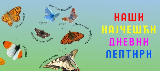Наши најчешћи дневни лептири