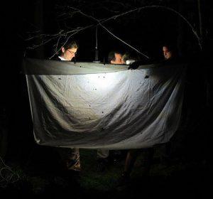 Чланови ХабиПрота у ноћном лову (Фото: М. Миљевић)