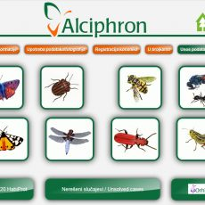 Алцифрон