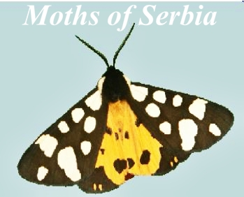 Moths of Serbia