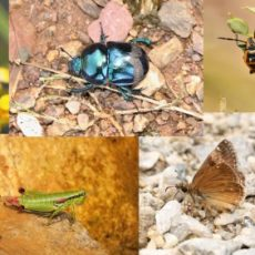 Research of insects of Ovčar-Kablar gorge (2016)