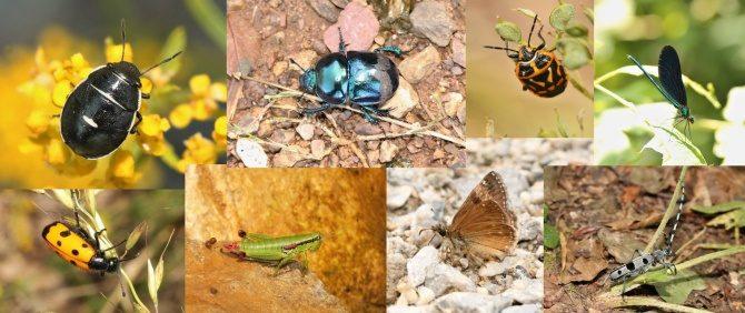 Istraživanje insekata u Ovčarsko-kablarskoj klisuri (2016)